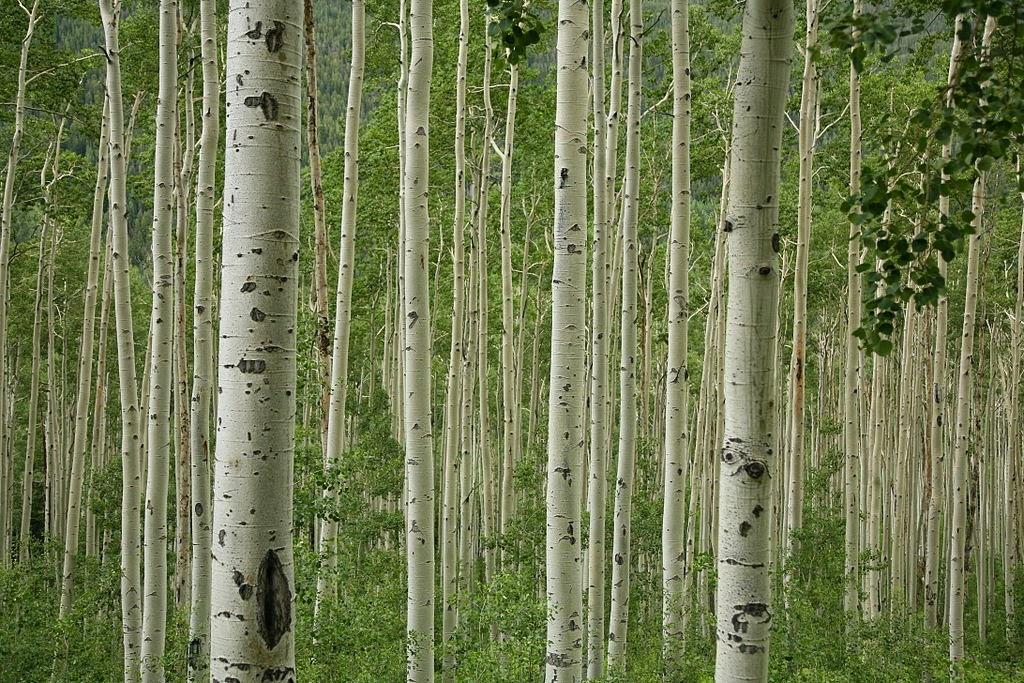 Alternativas para cuidar el medio ambiente cient ficos for Arboles perennes de crecimiento rapido