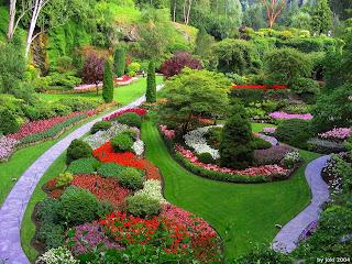imagen de un hermoso jardin