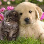 Παγκόσμια Ημέρα των Ζώων σήμερα