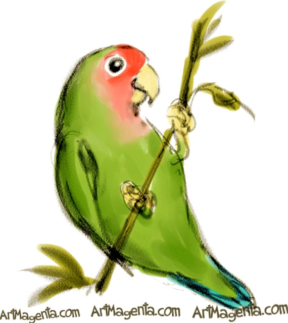 Rosy-faced Lovebird sketch painting. Bird art drawing by illustrator Artmagenta.