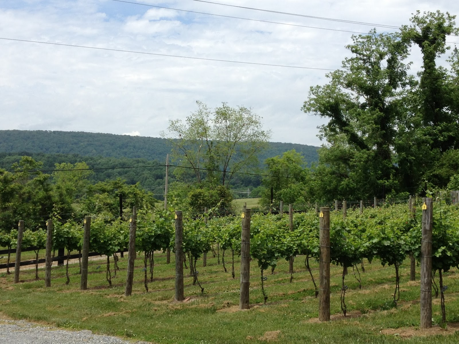 As much as I love some of the larger Virginia vineyards small family-owned vineyards will always have a special place in my heart. & At the Lamppost: Cardamon Family Vineyards