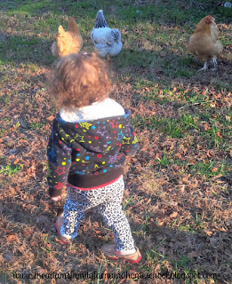 Toddler trying to catch a chicken