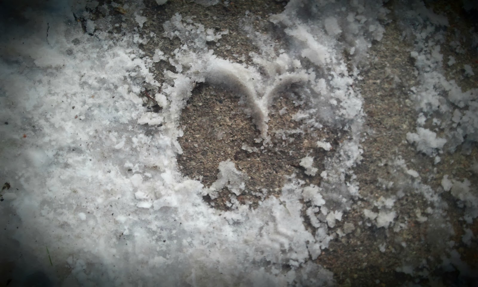 heart print in the snow