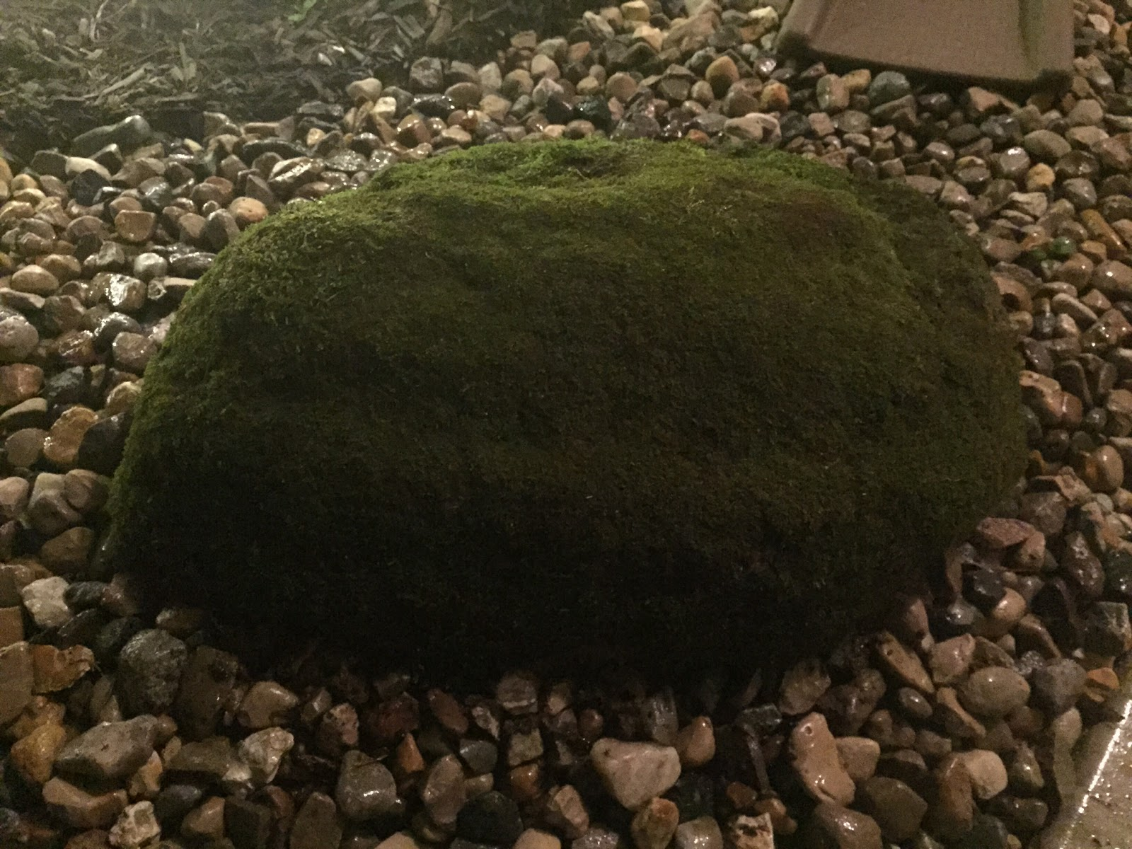 dark green fuzzy moss rock