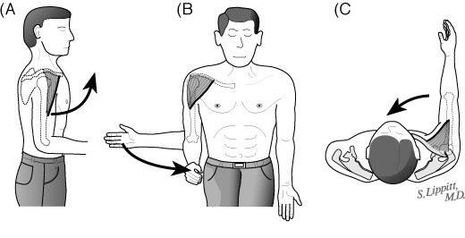 External rotation and internal rotation exercises