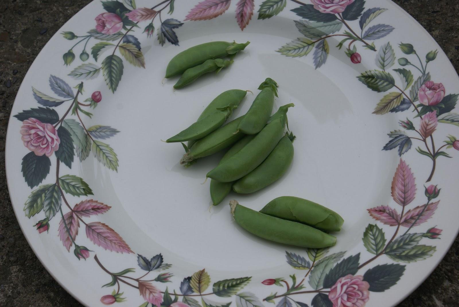 Practically Penniless Garden harvest