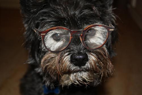 glasses dogs wearing adorable dog amazing