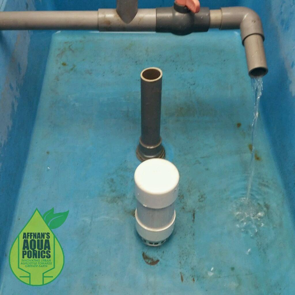 how to raise crawfish in aquaponics