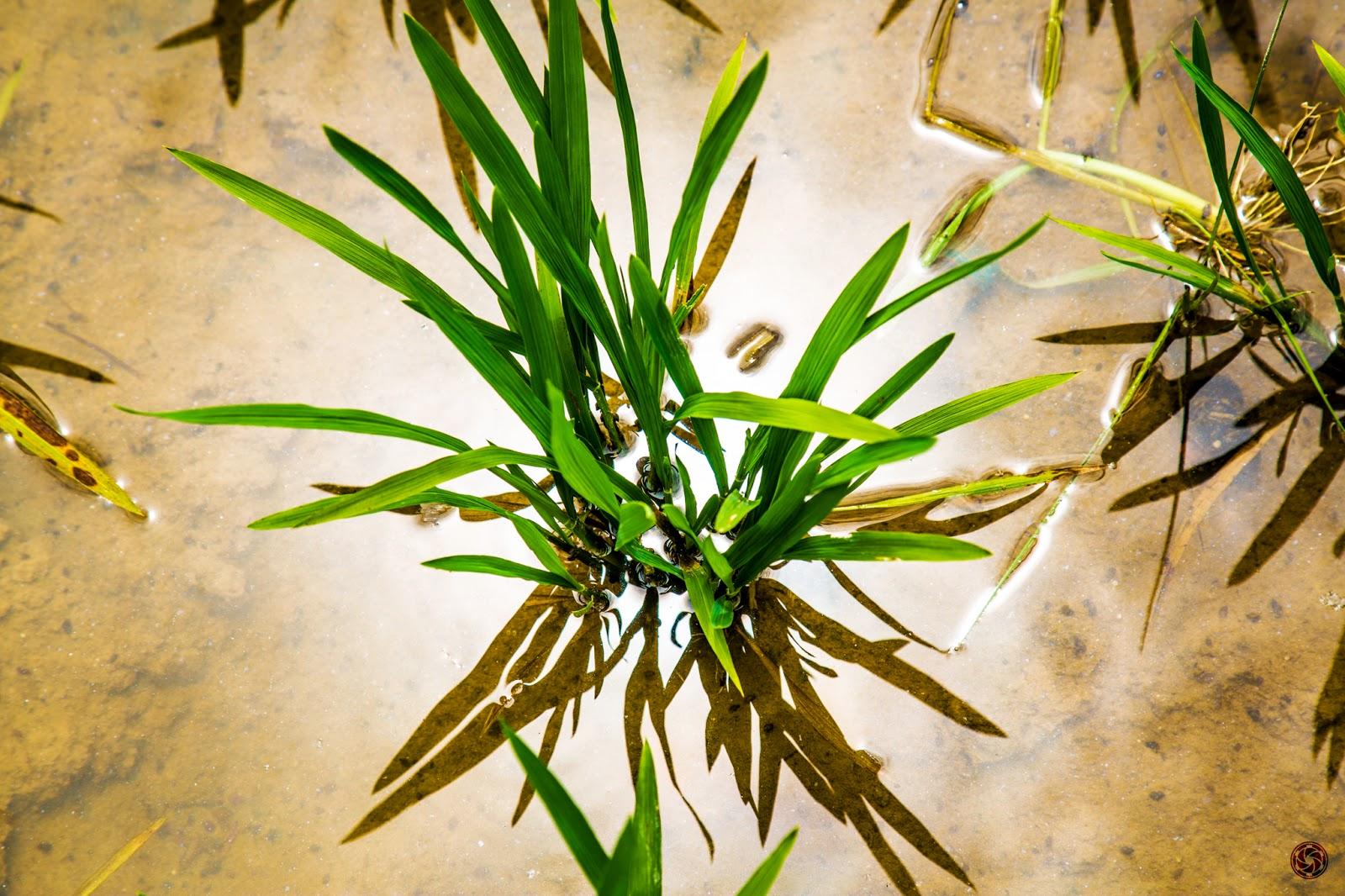 Planta :: Canon EOS 5D MkIII | ISO100 | Canon 24-105 @105mm | f/8 | 1/200s