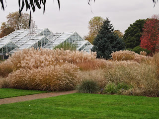 Autumnal grasses at Kew. Photo by Oliver Borrow, London.