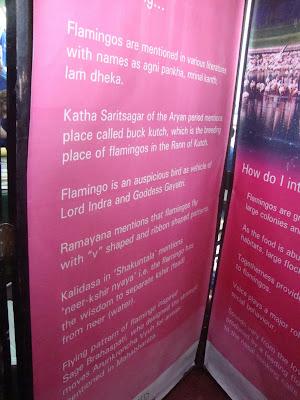 Flamingo Festival,16 April 2011,Sewri Jetty