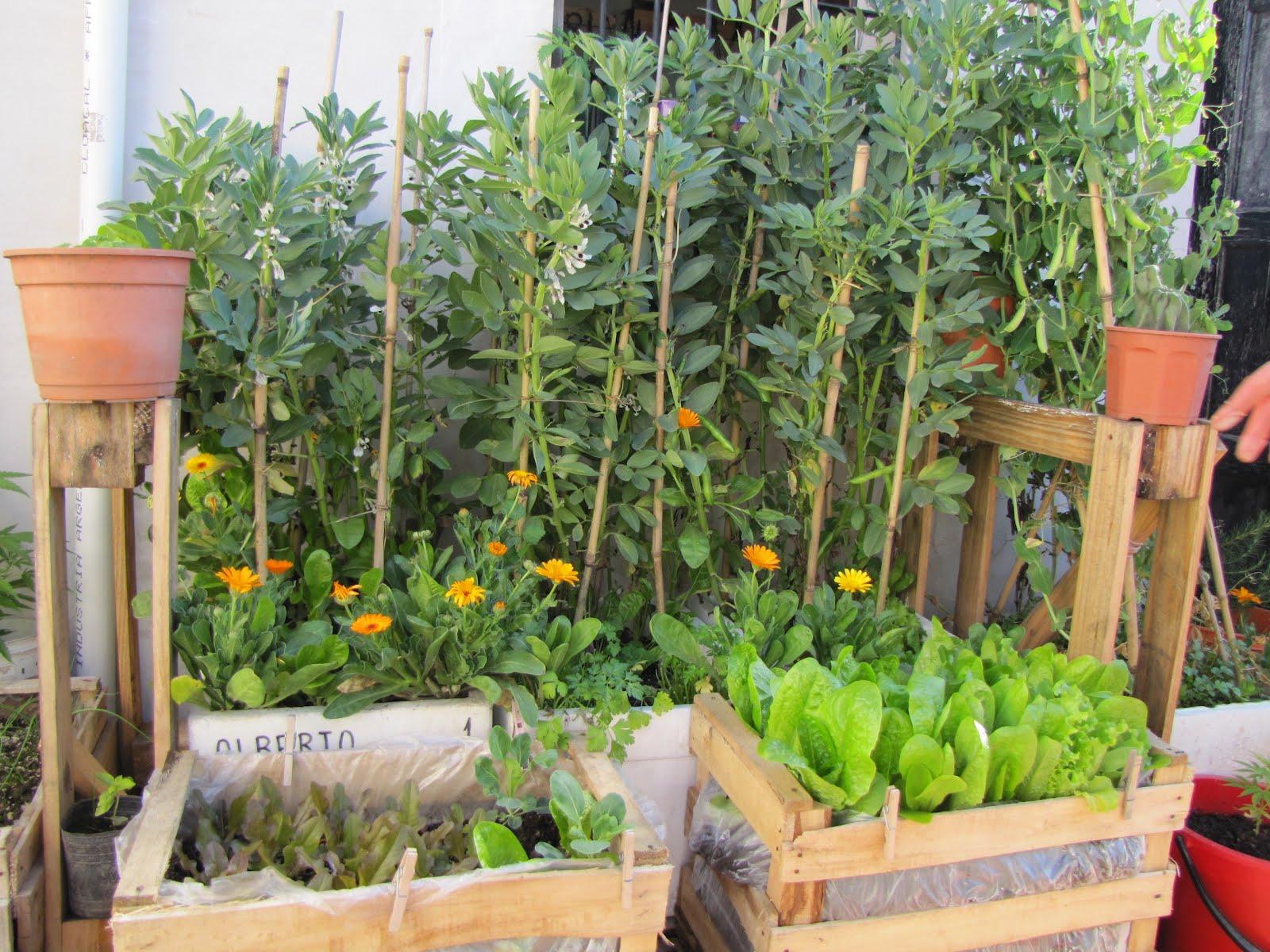 Cursos de huerta org nica huertas del mundo parte 1 for Plantas para huerta organica