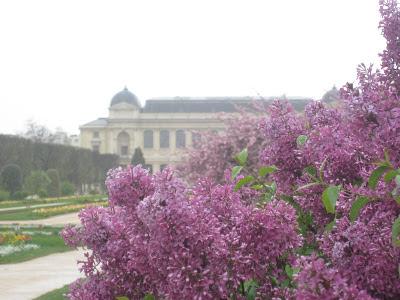 Lilacs in a Parisian garden