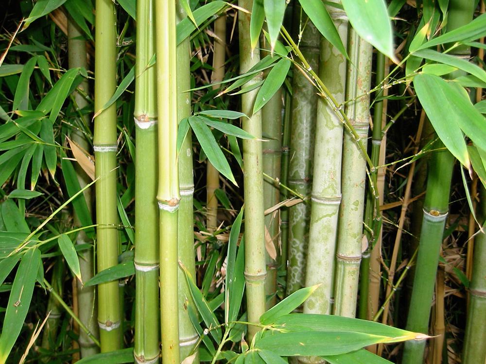 Floer blog trends en tips eiken houten parket laminaat for Bamboe plant
