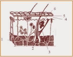 TEST BLOK KELAS XI SEMESTER 2 | Materi dan Soal Biologi