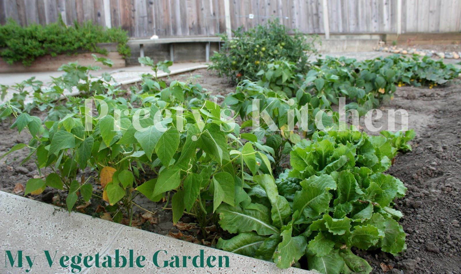 preety 39 s kitchen a peek in my vegetable garden july 2013