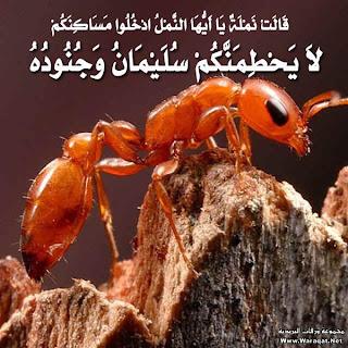 حقيقة تحطم النمل سبحان الله !!!