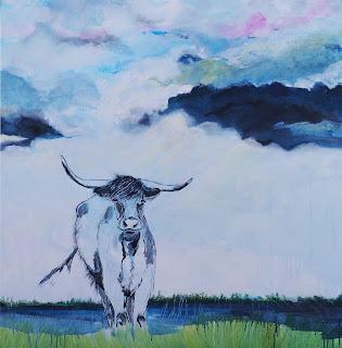 Ko, kvæg, skotsk langhorn, blæsvejr, regnvejr, landbrug