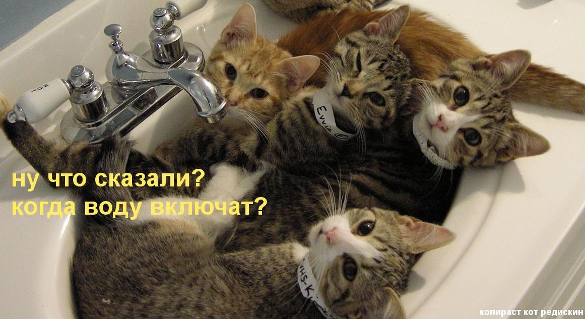 Коты в раковине: ну что сказали, когда воду включат - котоматрица Редискина