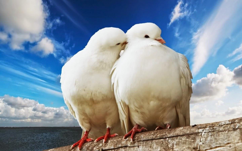 Fotos de parejas de animales de lo más peculiares :: subdivx - imagenes de parejas de animales