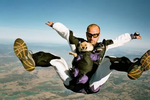 skydiving with a dog