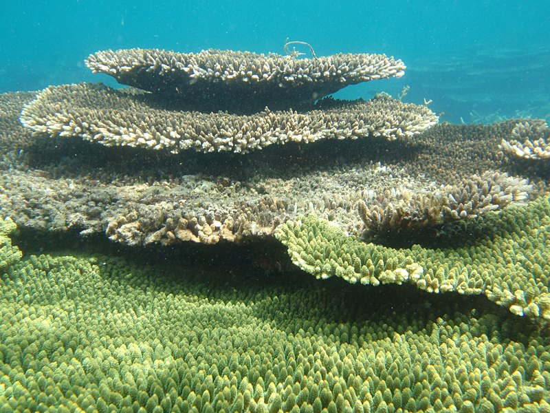Types Of Corals