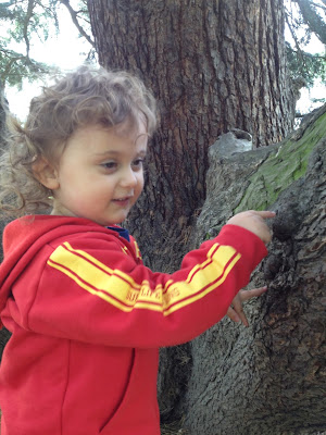 Day 170 of The 366 Project, tree, tree rock, toddler
