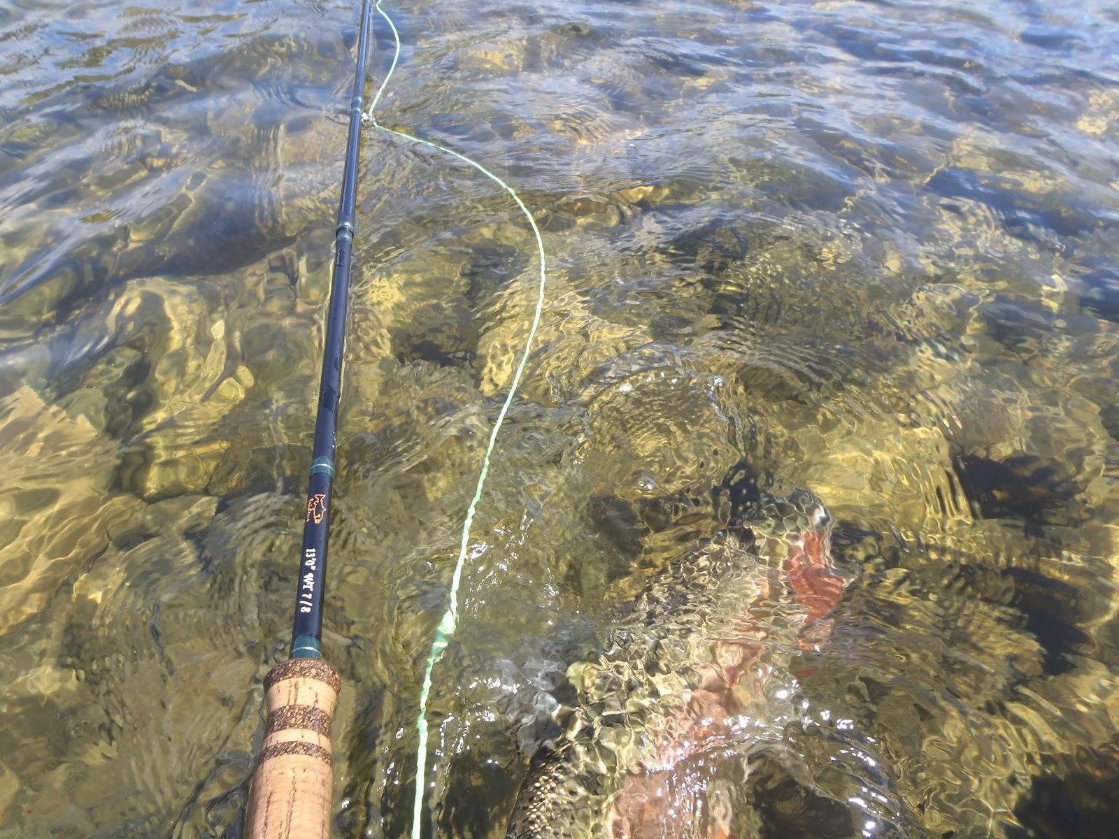 Sacramento river california spey rod summer steelhead fly for Steelhead fishing california