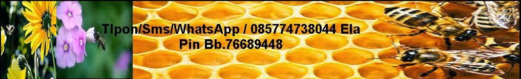Propolis Asli Harga Termurah Di Jamin Asli 100% 085774738044 ela