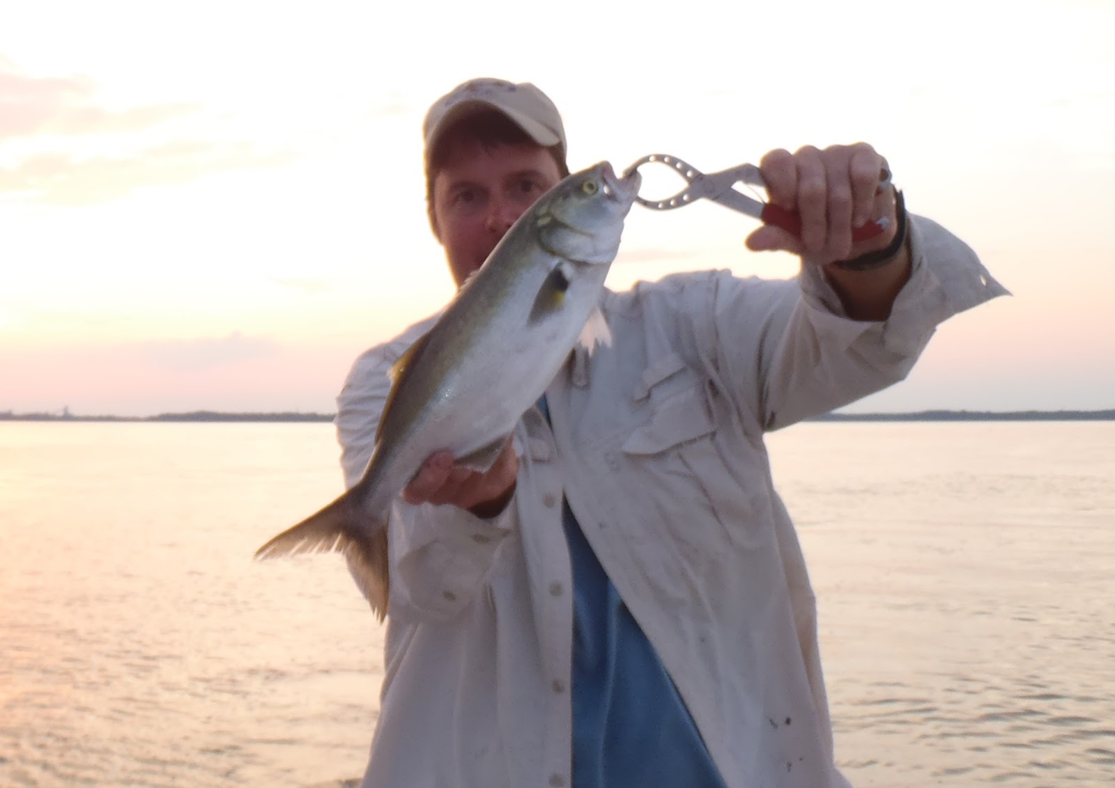 Fishing the chesapeake ocean fish in the upper bay for Upper chesapeake bay fishing report
