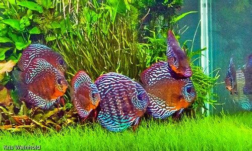aquascape fish tank, aquascape fish food, aquascape fish bowl, aquascape fish tank guide, aquascape fish retailing system, aquascape fish imports, aquascape fish list, aquascape fish food pellets, aquascape fish pond, aquascape fish species, aquascape fish tank, aquascape fish for sale, aquascape fish food, aquascape fish bowl, aquascape fish tank guide, aquascape fish retailing system, aquascape fish imports, aquascape fish list, aquascape fish food pellets, aquascape fish pond, aquascape aquarium fish, angelfish aquascape, aquascaping a fish tank, aquascaping and fish, aquascaping while fish are in tank, aquascaping a fish tank, aquascape fish bowl, aquascape black fish safe silicone sealant, aquascape buy fish, aquascape big fish, aquascape best fish, aquascape com fish, aquascape discus fish, aquascape designs fish tank, aquarium aquascape with fish designs, aquascape exotic fish, aquascape fish for sale, aquascape fish food, aquascape fish food pellets, aquascape premium staple fish food pellets, fish for aquascape tank, aquascape fish tank guide, aquascapes big fish games, good aquascape fish, aquascape fish imports, aquascaping ideas fish, aquascaping with fish in tank, fish in aquascape, aquascape fish list, aquascape live fish, aquascape fish imports ltd, aquascape bubble light fish, aquascaping marine fish tank, aquascaping my fish tank, nano aquascape fish, aquascapeonline fish, aquascape for oscar fish, o-fish aquascape, aquascape fish pond, aquascape fish food pellets, aquascape fish retailing system, aquascape fish store, aquascape schooling fish, aquascape fish species, aquascape fish retailing system, aquascape black fish safe silicone sealant, aquascape premium staple fish food pellets, aquascape fish tank, aquascape fish tank guide, aquascape tropical fish, aquascaping tropical fish tank, aquascape designs fish tank, aquascaping your fish tank, aquascaping marine fish tank, aquascaping my fish tank, fish tank aquascape ideas, aquascape with fish, aquascape without fish, aquascaping with fish in tank, aquascaping while fish are in tank, aquarium aquascape with fish designs, aquascaping your fish tank, aquascape fish for sale, aquascape fish, aquascape fish imports, aquascape fish tank, aquascape fish food, aquascape fish retailing system, aquascape fish list,