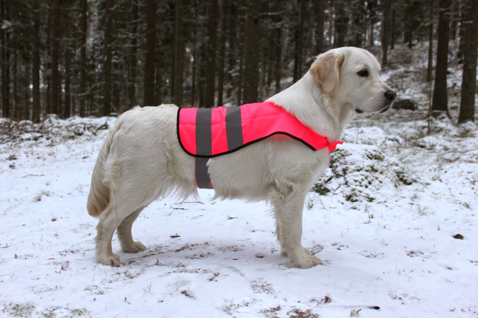 Heijastinliivi koiralle ohje