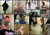 Video Torturas Cárcere