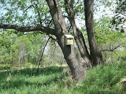Grand Vue Nest Box