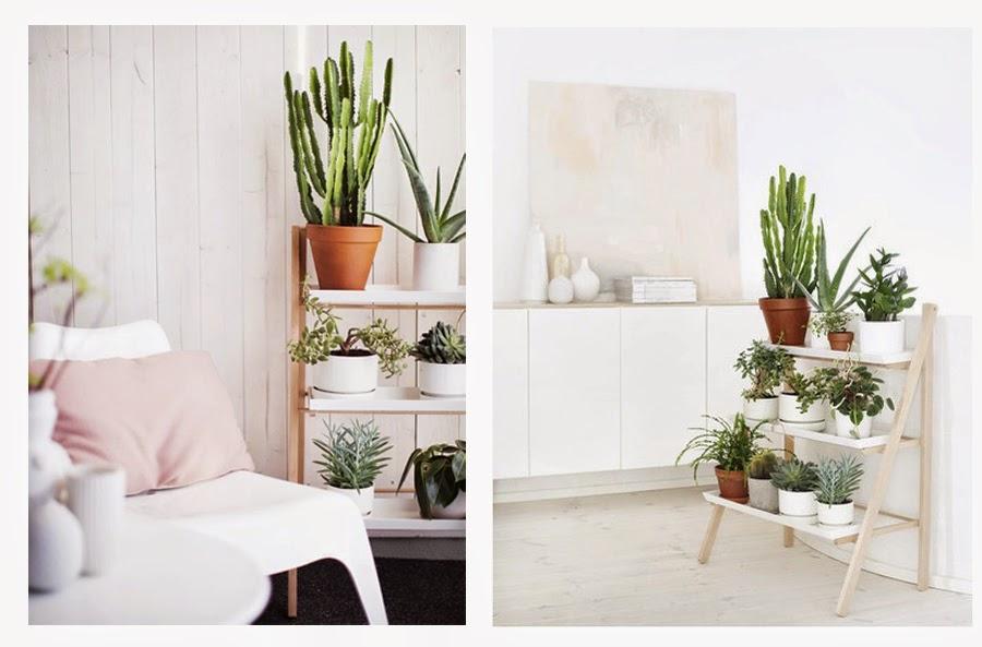 Alessandra piante - Piante da parete ...
