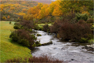 Árboles de Castilla la Mancha