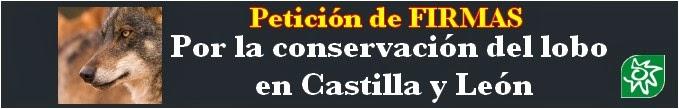https://oiga.me/campaigns/por-la-conservacion-del-lobo-en-castilla-y-leon