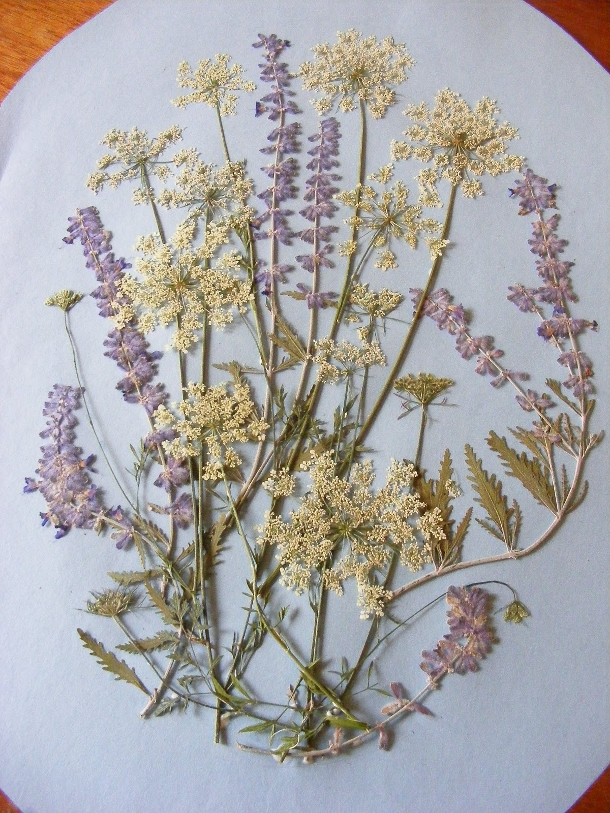 The Dusty Lane Queen Annes Lace Pressed Flowers In A Frame
