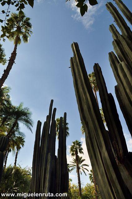 Jardines-Majorelle-Cactus