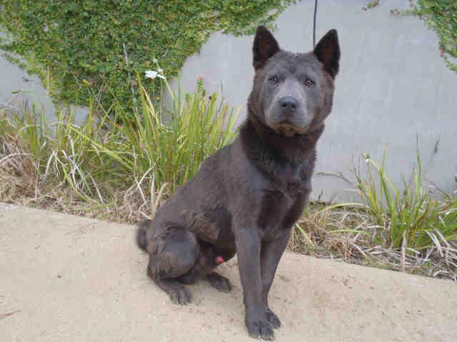 Petsmart Dog Adoptions Los Angeles