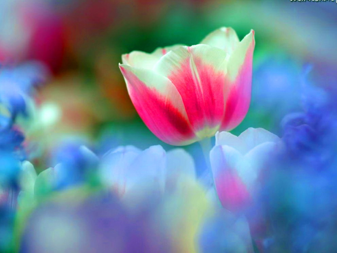 beautiful spring desktop wallpaper rainbow - photo #3