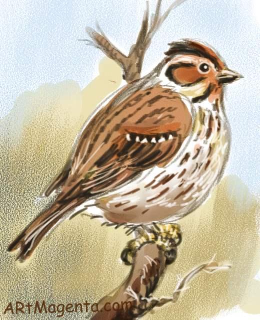 Dvärgsparv är en fågelmålning av  Artmagenta.