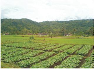 Keadaan cuaca di daerah pertanian.