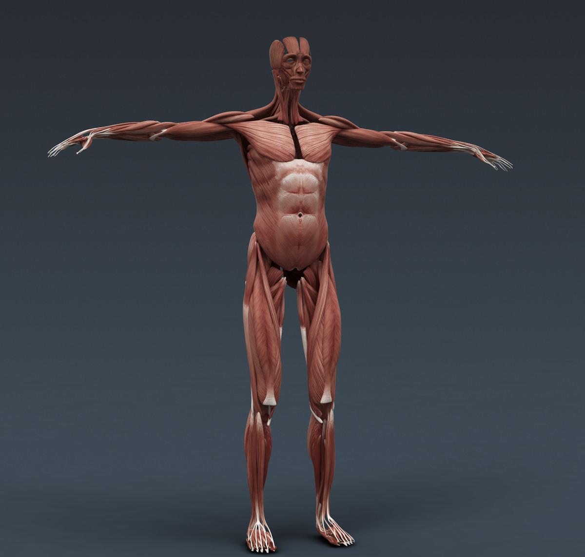 3D ARTIST: 3D Female Anatomy Modeling