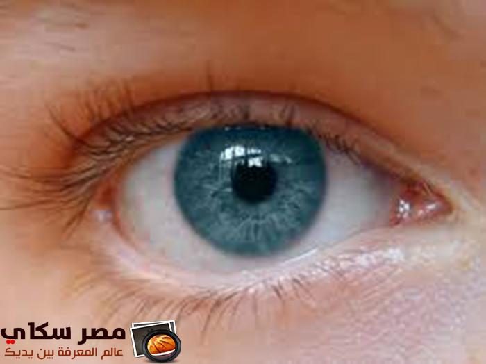 كيفية الحفاظ على صحة عيناك ومما تتكون ؟