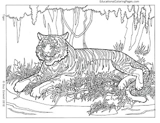 Tiger coloring pictures for young boy kid