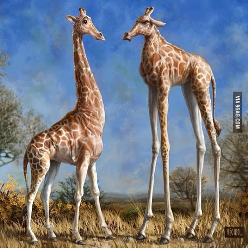 funny giraffe jokes - photo #3