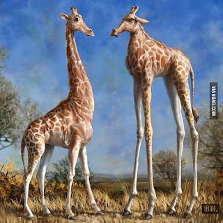 Funny Short tall giraffe safari Africa image