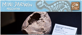 Mini Darwin