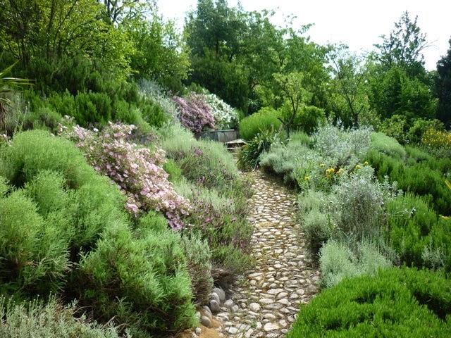 Il giardino gaudente giardino mediterraneo fioriture di - Giardino mediterraneo ...